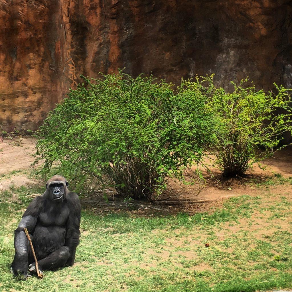 The Gorilla Posing Workshop.